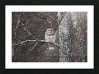Sleepy Owl Picture Frame print