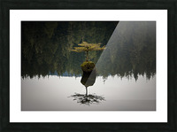 Reflection on a Bonsai Tree Picture Frame print