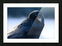 Raven Picture Frame print