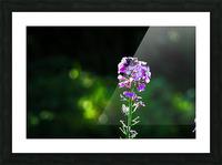 Royal Flower Picture Frame print