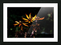 Fire Flower Picture Frame print
