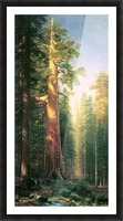 The big trees, Mariposa Grove, California by Bierstadt Picture Frame print