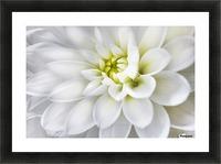 White Dahlia Picture Frame print