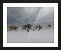 Longhorns Picture Frame print
