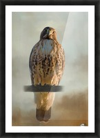 View Life - Hawk Art by Jordan Blackstone Picture Frame print