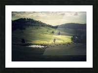 Where The Bison Roam Picture Frame print