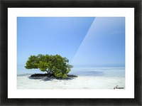 FLORIDA KEYS Lonely Tree Picture Frame print