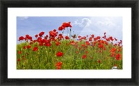 Field of Red Poppies Picture Frame print