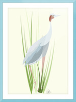 Sarus Crane Picture Frame print