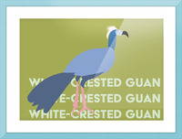 White-Crested Guan Picture Frame print