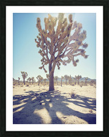 Joshua Tree National Park Picture Frame print