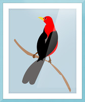 Scarlet TANAGER Picture Frame print