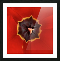 Treasured Tulip Picture Frame print