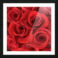 Eternal Roses Picture Frame print