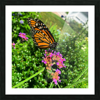 Butterfly Bliss  Picture Frame print