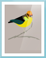 Black Eared Tanager Picture Frame print