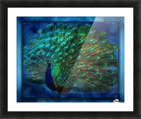 Being Yourself - Peacock Art by Jordan Blackstone Picture Frame print