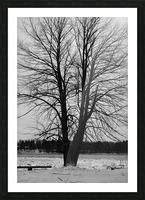 L'arbre de vie Impression et Cadre photo