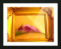 Gilded Lilly  Picture Frame print