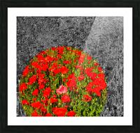 Poppy Popper Popping Picture Frame print