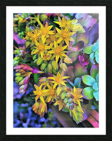 Echeveria Hybrid With Yellow Flowers Picture Frame print