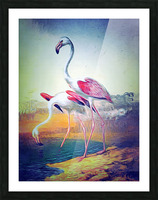 Regiment of Flamingoes Picture Frame print
