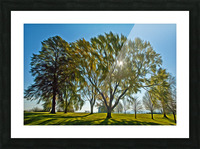 Soleil du printemps Picture Frame print