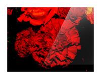 sofn ED31563A Picture Frame print