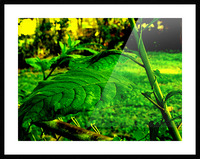 sofn EE42975E Picture Frame print