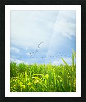 Midsummer Cornfield Picture Frame print