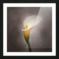 Graceful flower - Calla No. 4 | vintage style  Picture Frame print