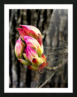 This Buds For You Picture Frame print