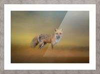 Foxy Picture Frame print