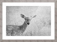 Pretty Doe Picture Frame print