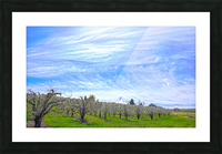 Spring in the Orchard Hood River Valley Oregon Picture Frame print