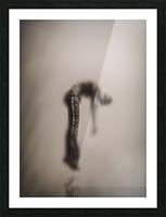 fluitantia desiderari  Picture Frame print