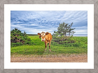 Moo Picture Frame print