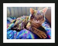 Rainbow Kitten Surprise  Picture Frame print