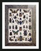 Beetles Picture Frame print