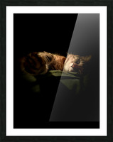 In the Shadows of the Night Picture Frame print