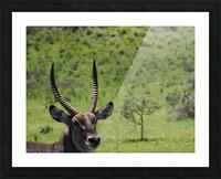 D8061889 B94D 4585 85A6 654F34B6CEB0 Picture Frame print