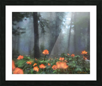 Peaceful Feeling Picture Frame print