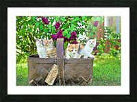 Basket of Kittens Picture Frame print