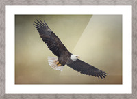 King of the Skies Picture Frame print