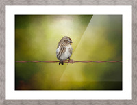 Redpoll on a Wire Picture Frame print
