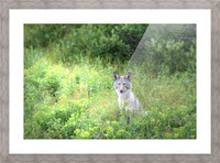 Sitting Pretty Picture Frame print