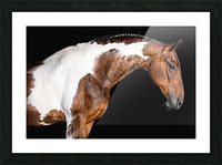 Paint Horse Portrait - Comanche Picture Frame print