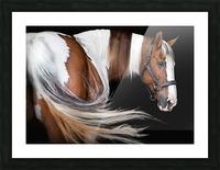 Paint Horse Portrait Picture Frame print