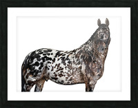 Spotted Horse Portrait Picture Frame print