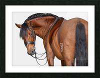 Bay Horse Portrait Picture Frame print